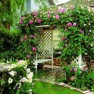 arbor-roses-m-m